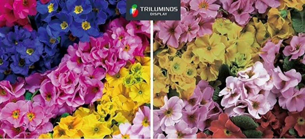 Tivi Sony sử dụng công nghệ Triluminos thể hiện hình ảnh vô cùng xuất sắc